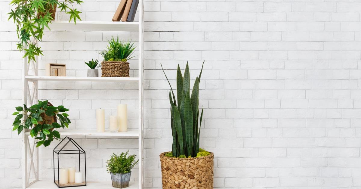 6 helppoa viherkasvia kotiin ja parvekkeelle